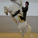 01_Courbette_c-Spanish-Riding-School_Herbert-Graf